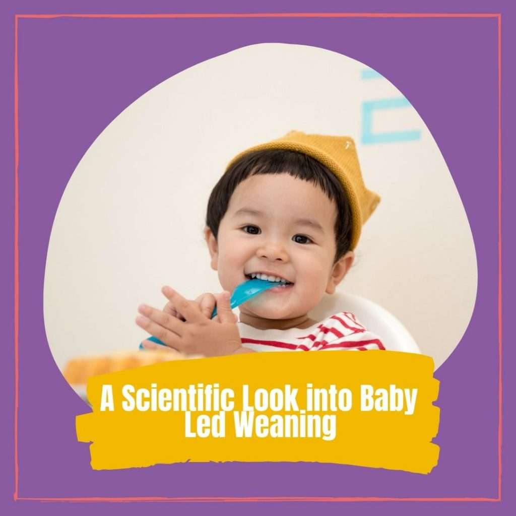 A Scientific Look into Baby Led Weaning Cover photo